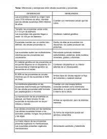 Diferencias Y Semejanzas Entre Células Eucariotas Y Procariotas Ensayos Andrea Vera Salazar